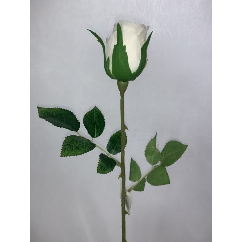 Róża pojedyncza kolor 1